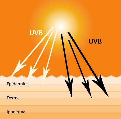 606df3e4f11e8 Back to Basics  la crema solare (filtri chimici e fisici, SPF e fototipi)